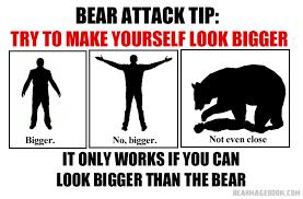 Funny Bear Meme - bear survival tips album on imgur
