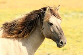 horse pictures pexels free stock photos