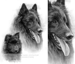 belgian sheepdog oklahoma 188 best images about art on pinterest cowboys canvas prints