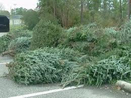 christmas tree recycling locations open wway tv3
