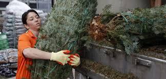christmas trees on sale stats christmas tree sales statistics statistic brain