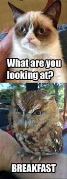 Image 9 Best Grumpy Cat - grumpy cat clipart yolo pencil and in color grumpy cat clipart yolo