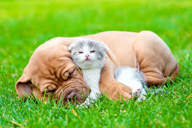Wallpaper Dogs Picture Kittens Dogue De Bordeaux Cats Dogs Grass Animals