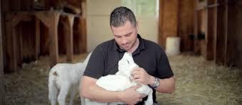farm shepherding animals from pasture plate link tv