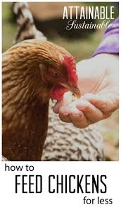 2176 best poultry images on pinterest