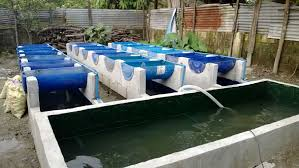 Backyard Fish Farming Tilapia Aquaponics In The Philippines Aquaponics Philippines