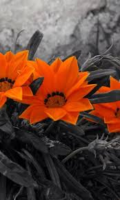 249 best a touch of orange images on pinterest color splash