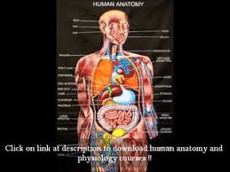 The Human Anatomy Pictures Show Me A Picture Of The Human Anatomy Periodic Tables