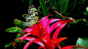 beautiful butterflies flowers planet earth amazing nature