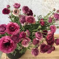 Ranunculus 637 Best Ranunculus Images On Pinterest Flowers Pretty Flowers