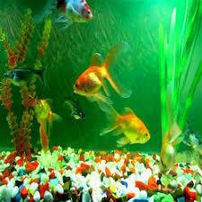 fish aquarium manufacturers suppliers traders