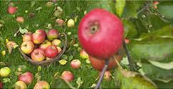 apple holler family farm experience the magic of apples family fun