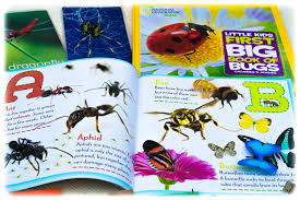bugs insects and other arthropods montessori from