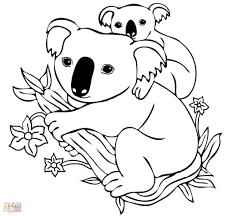 shining koala coloring pages koalas cecilymae