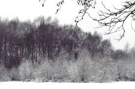 free images landscape tree nature forest grass branch snow