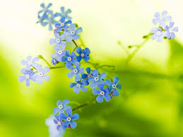 beautiful flower images flower picture