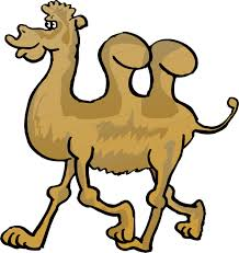 funny thanksgiving gifs camel cartoon pictures free download clip art free clip art
