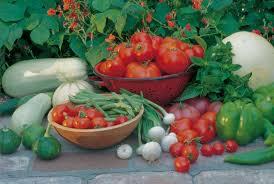 drought strategies for vegetable gardening u2014 seed savers exchange blog