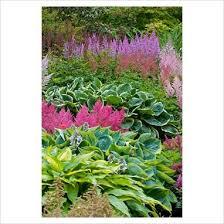 472 best gardening hosta u0026 fern love images on pinterest