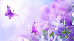 lilac flowers flowers soft pastel summer lavender fragrant butterflies floral