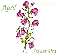 sweet pea flowers inr 019 4 april sweet pea flower of the month cling set