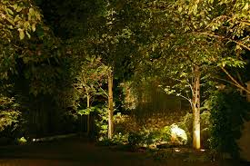 26 impressive landscape trees backyard u2013 izvipi com