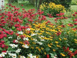 butterfly gardening attracting butterflies to your backyard