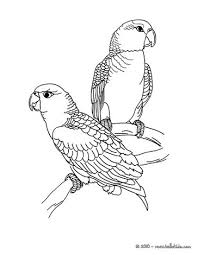 cute peafowl coloring pages hellokids