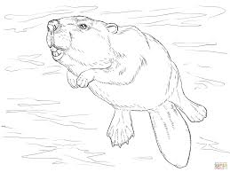 swimming beaver coloring page free printable coloring pages