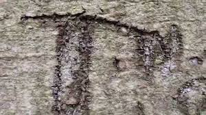 Initials Carved In Tree Wwii Veteran Finds Initials Carved In Tree Near Normandy While