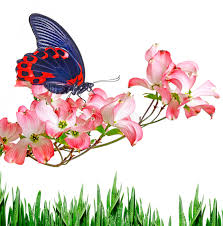 butterfly and flowers stock photo image of insect 51317766
