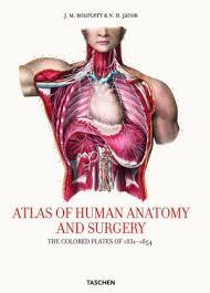 Human Anatomy Textbook Pdf Compdeviror1982 Atlas Of Human Anatomy And Surgery