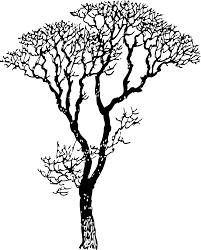 nature meanings custom design