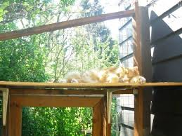 homeowner builds a weird patio out back then the cat climbs in