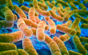 Here L 2016 Super Way Long Dreaded Superbug Found In Human And Animal In U S