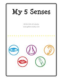 my 5 senses book gift of curiosity