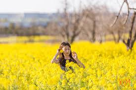Flower San Jose - yellow mustard flowers u2013 valentine u0027s day adventure san jose fun