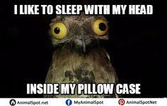 Potoo Bird Meme - potoo bird meme different types of funny animal memes pinterest