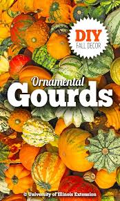 29 best gourds painting and dying techniques images on