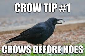 Crow Meme - crow tip 1 crows before hoes crowtip quickmeme