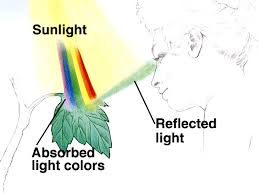 external image sb9 4 jpg diagram showing the light reflected by