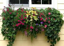 5 easy window flower box ideas for every cleveland home