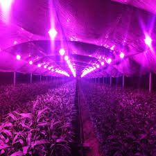 new 50w led grow chip 80 is spectrum 20 is cool white