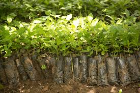what do school fees and tree seedlings to do with saving