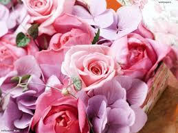 Pink Roses Wallpaper by Pale Pink Roses Hd Wallpaper