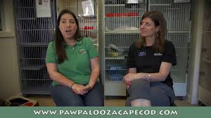 paw palooza cape cod u0027s pet festival u0026 dock dogs tournament youtube