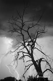lightning tree silhouette portrait bw photograph by bo insogna