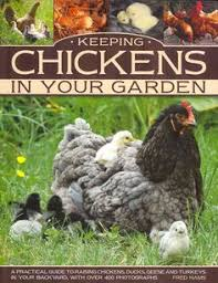 Guide To Raising Backyard Chickens by How To Raise Ducks In Your Backyard Raising Backyard And Farming