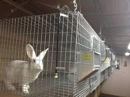 Rabbit Hutch For 4 Rabbits Cages Az Rabbits