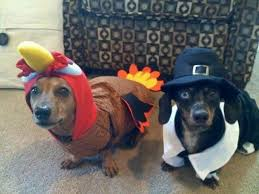 15 best thanksgiving images on supplies pet